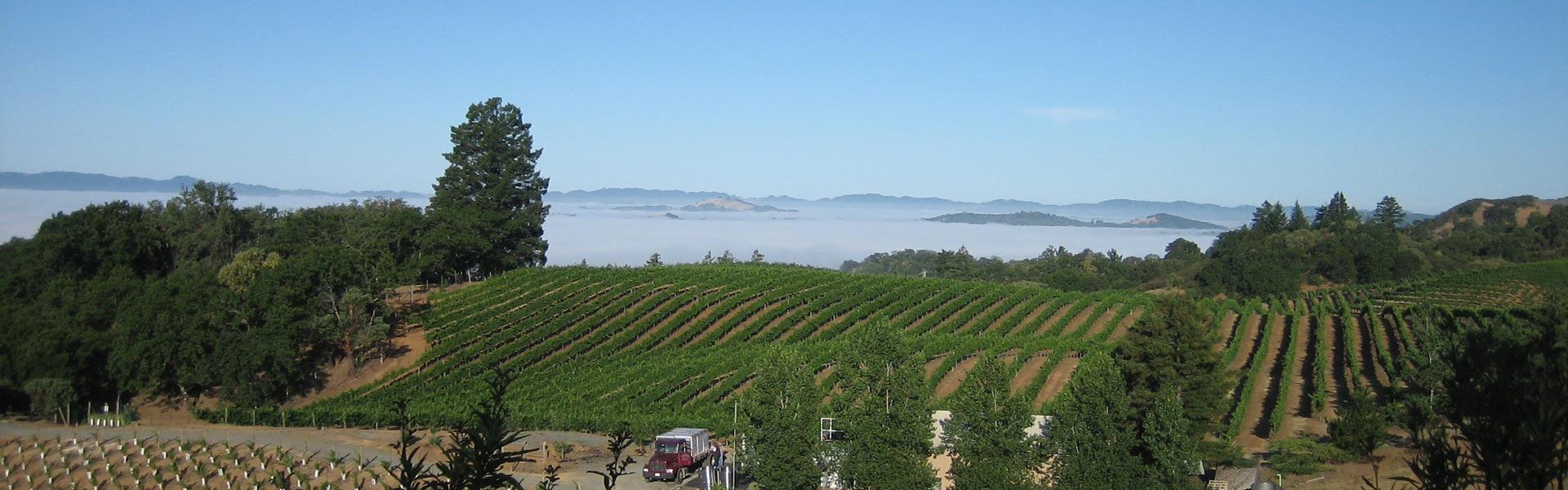Sky Pine Vineyards
