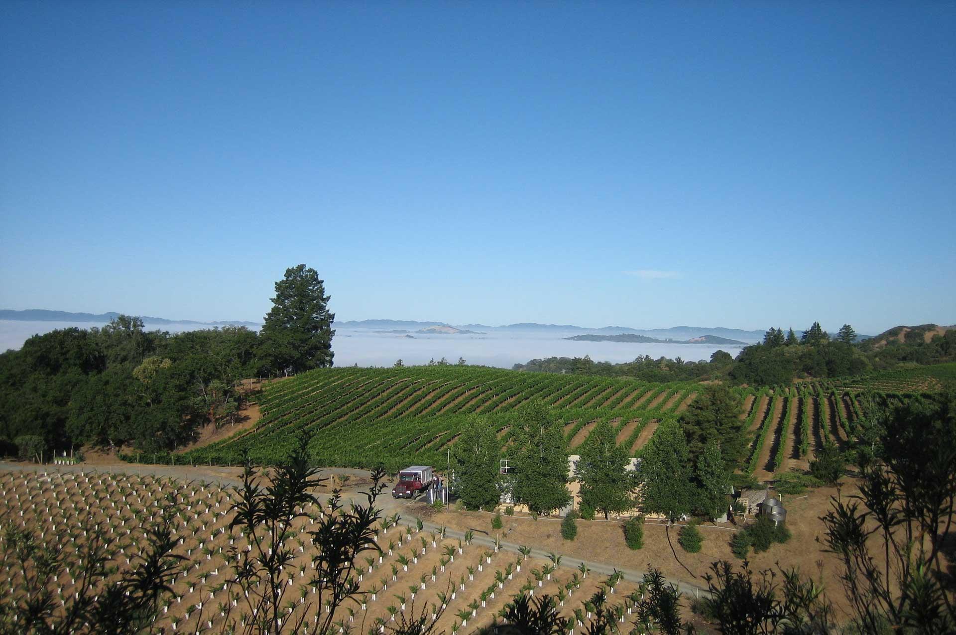 Sky Pine Vineyards