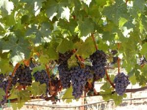 Fall at Sky Pine Vineyards