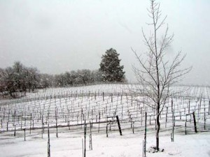 Winter at Sky Pine Vineyards
